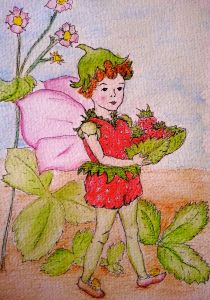 Beattie's strawberry fairy
